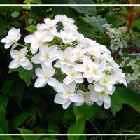 プリンスメロンの花