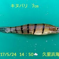 笑転爺の釣行記 5月24日☁ 浦賀・久里浜