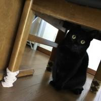 トノは机の下に避難
