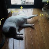 猫の気持ち・・・わからへん???