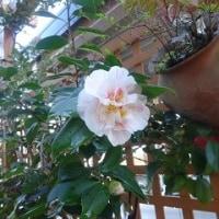我が家の庭にも春が・・・