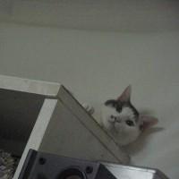棚の上のめんま。