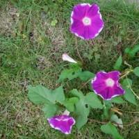 時季外れの花