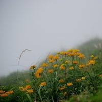 伊吹山  山上の花畑