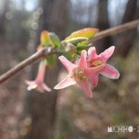平成29年3月5日(日) に見たその他の花♪