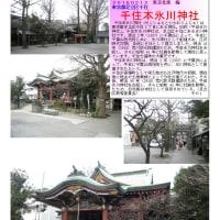 花巡り 「梅-159」     千住本氷川神社