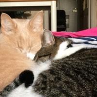 お母ちゃんの至福の時💕猫との語らい