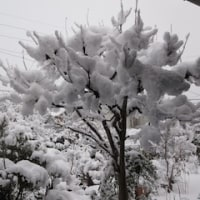 また雪です