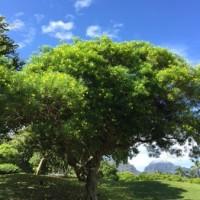 Kauai Lagoons Golf Club�ηʴѡ���