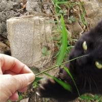 香り泥棒(^^♪&猫ちゃん。