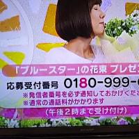5/22・・めざましお花プレゼント本日2時まで