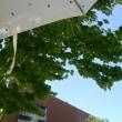 昨日はビニ傘、今日は日傘♪