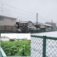 東京の初雪