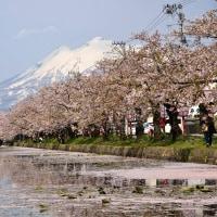 弘前公園の花見