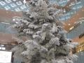 東京丸の内で一番高いクリスマスツリー 丸の内KITTEのホワイトツリー 日本郵便もやりますねえ!