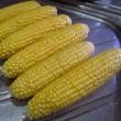 エダマメ「丹波黒豆」の間引きとトウモロコシ「おおもの」のタネまき(7)と収穫(3)