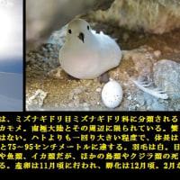 現代の探検家《田邊優貴子》 =64=