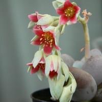 3つの色っぽい赤花