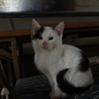 比治山の猫226