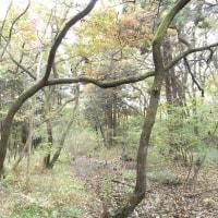 秋・街の中森の中<その8>再びこんぶくろ池