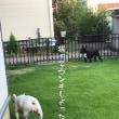 庭へ芝刈りに