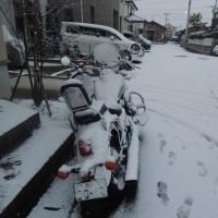 雪ですっ!