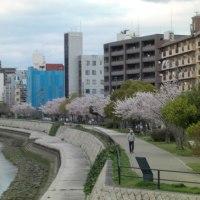 桜見物 散歩