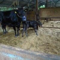 産直国産牛の産地 岡山ふたみ牧場に行ってきました