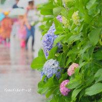傘ドロボー!(ある雨の日の昼下がり)