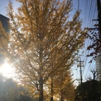 11月24日の練習 ~ 駅前センター視聴覚室