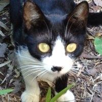 <非情だが。。。可愛がられる猫ばかしでない。野良ちゃん 今世のサヨナラ。 (哀悼歌)>