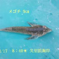 笑転爺の釣行記 1月17日☀ 久里浜・長瀬