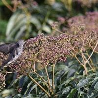 中腹で出会った鳥たち