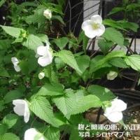 麹と開運の街、小江戸川越(埼玉県)