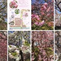 造幣局広島支局 花のまわり道