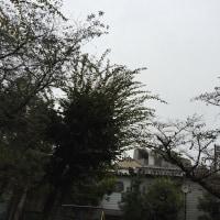 雨のち晴れ♪