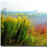 秋の野焼き