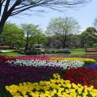 昭和記念公園 2017 その2