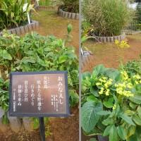市川万葉植物園