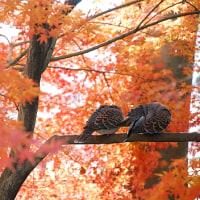 秋の陽の中で