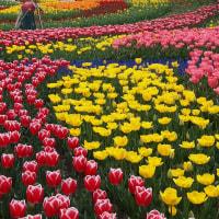 木曽三川公園の春 Ⅳ