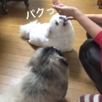 Gママの3分間クッキング♪大作編 !?