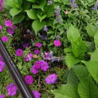 廻るもの 季節の花 (簡単更新)