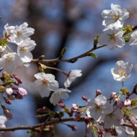 春雨の花見散策・・・・