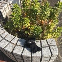 日乗 diary - 落としモノ 手袋81 lost glove81