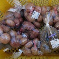 直売所に秋作のジャガイモを出荷しました