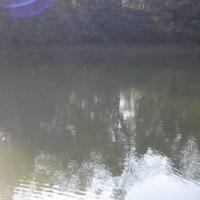 野池&鯉釣り