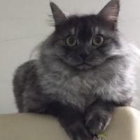 猫の冬支度