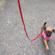 初めてのお散歩に行くでし!