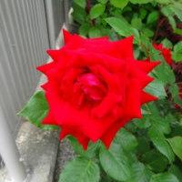L.Bで咲いている花たち